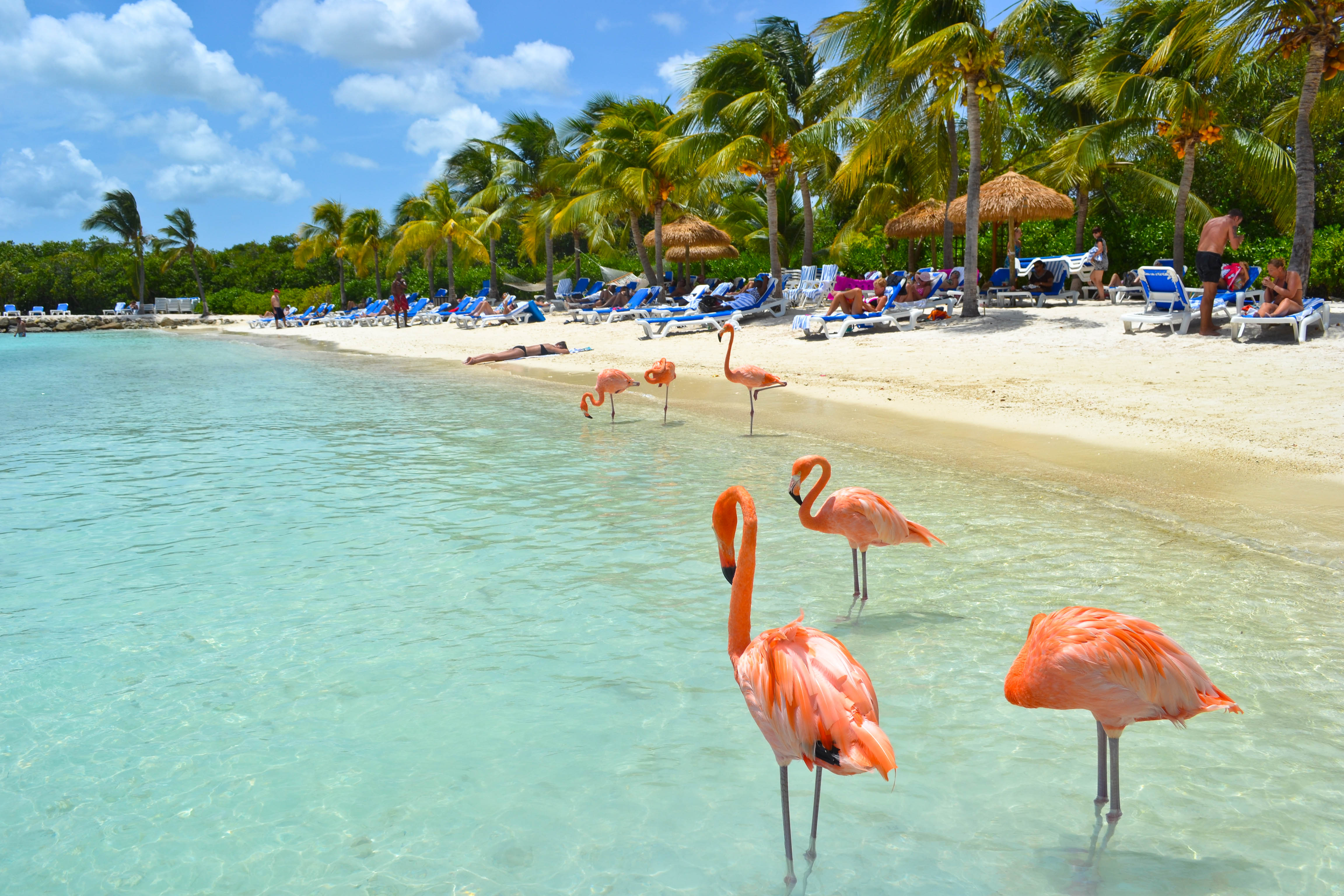 Aruba - Tani Bilet